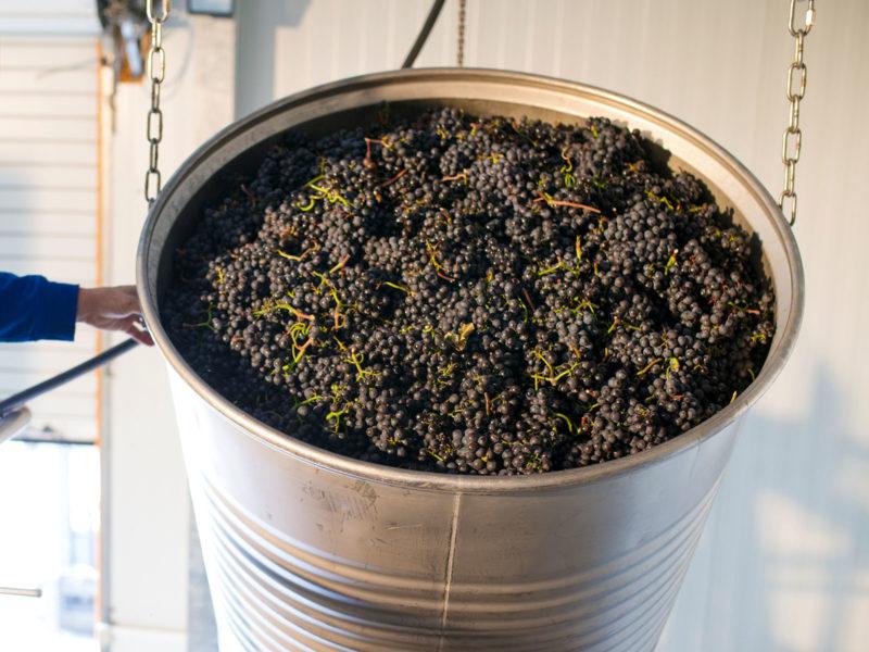 Weingut Dilger - Traubenverarbeitung - EDEKA Sulger